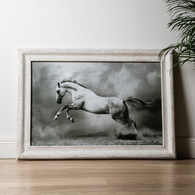 White Horse Photo Framed
